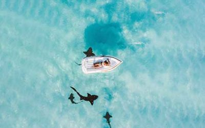 Recruiters negotiate like sharks